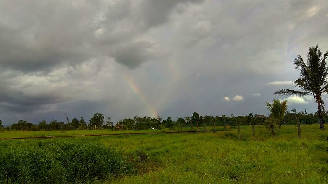 Rainbow shaped v Tree Rural Scene Agriculture Rainbow Field Sky