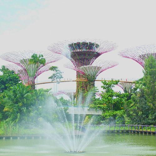 nature's park is ❤... Gardensbythebay Singapore Fujix10 Fujicamerasolove Fujicamera Camerafortravellers Soloveit