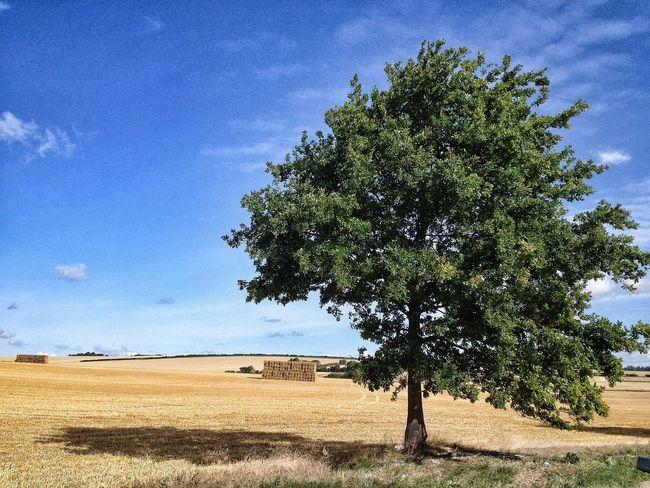 TreePorn Landscape