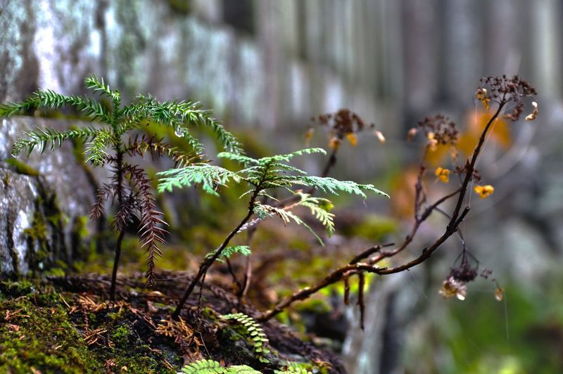 Outdoors Tourism Famous Place Growth Focus On Foreground Plant Close-up Stem Beauty In Nature Nature Freshness Fragility Selective Focus Branch Plant Life Botany Day Growing Scenics Springtime Non-urban Scene