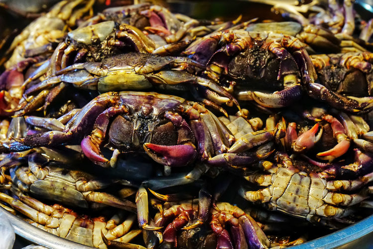Close-up of crab for sale in market