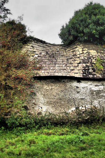 Abandoned cottage - Killokennedy Abandoned & Derelict Cottage Countryside Falling Down Fucia Grass Green Color Growth Ireland Outdoors Overgrown Ruin Ruined Cottage Slate Roof Tree