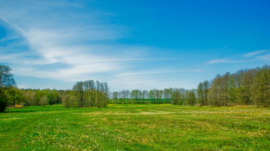 Backgrounds Background Copy Space Springtime Spring Plant Grass Sky Tree Green Color Land Tranquility Landscape Scenics - Nature Environment Tranquil Scene Beauty In Nature Field Nature No People Day Cloud - Sky Non-urban Scene Growth Idyllic Outdoors