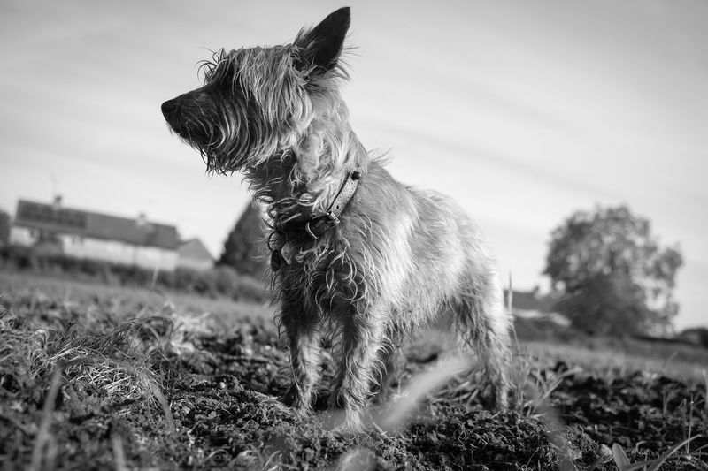 Terrier Dogs Of