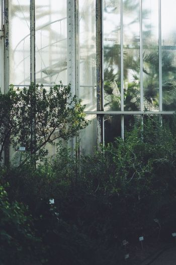Plant Window Glass - Material Transparent Tree Nature Growth Day No People Reflection Indoors  Green Color Built Structure Architecture Greenhouse Wet Sky Potted Plant Glass Window Frame