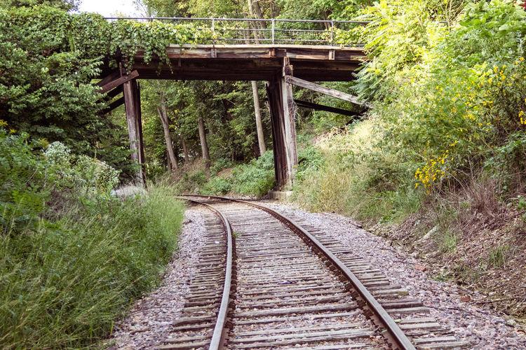 Railroad Passing Below Bridge Amidst Forest Trees