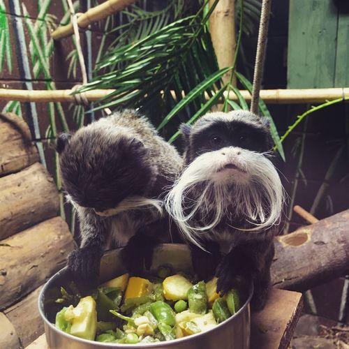 Monkey Zoo Ponteland