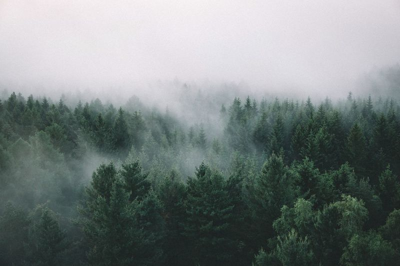 A little bit foggy Roadtrip Rural Traveling Photography Outdoors Explore Mountain Vscocam Remote VSCO EyeEm Best Shots Travel Landscape The Great Outdoors - 2016 EyeEm Awards Nature Summer Earth Mountain Range Germany Forest Saxony Tranquil Scene Fog Sunrise Travel Destinations