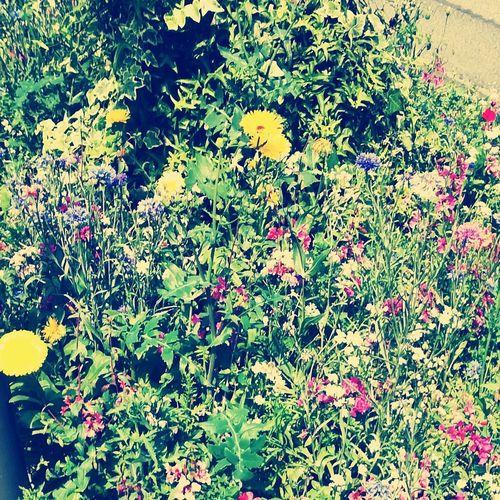 My Town Flower Köln Summer
