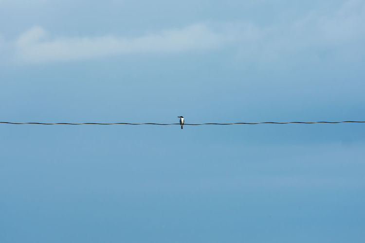 Lone Kingfisher on a wire. Alone Animal Body Part Animal Themes Animal Wildlife Animals In The Wild Beauty In Nature Bird Blue Cable Day Kingfisher Low Angle View Minimal Nature No People One Animal Outdoors Perching Scenics Simple Sky Telephone Line Waiting Watching