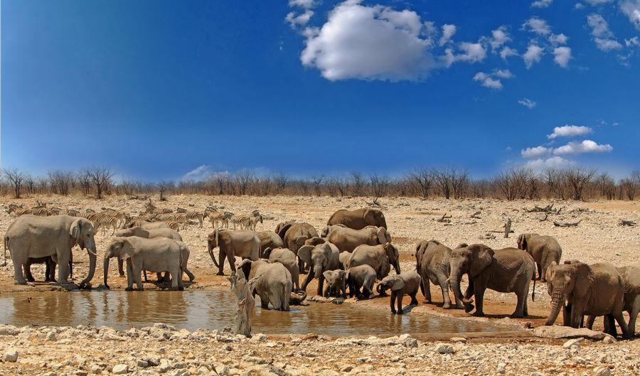 Herd of elephants standing on landscape against sky