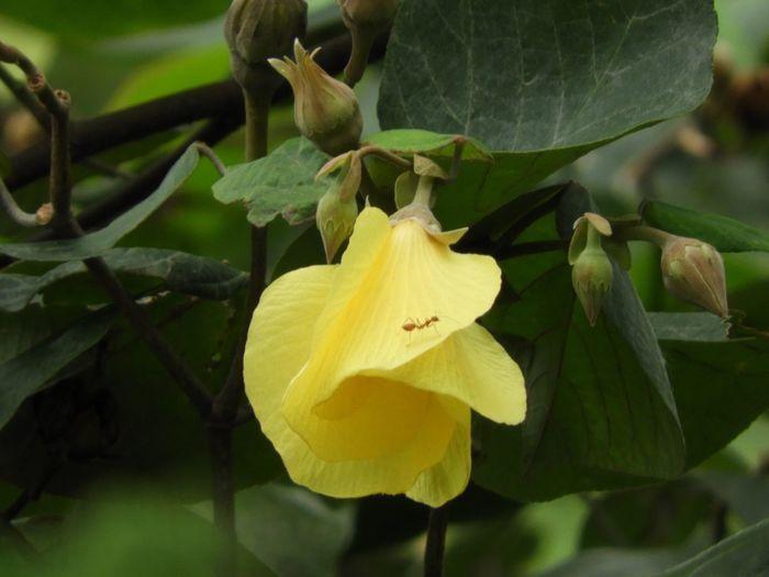 Portia Flower Yellow Flower Ant & Flower Nature