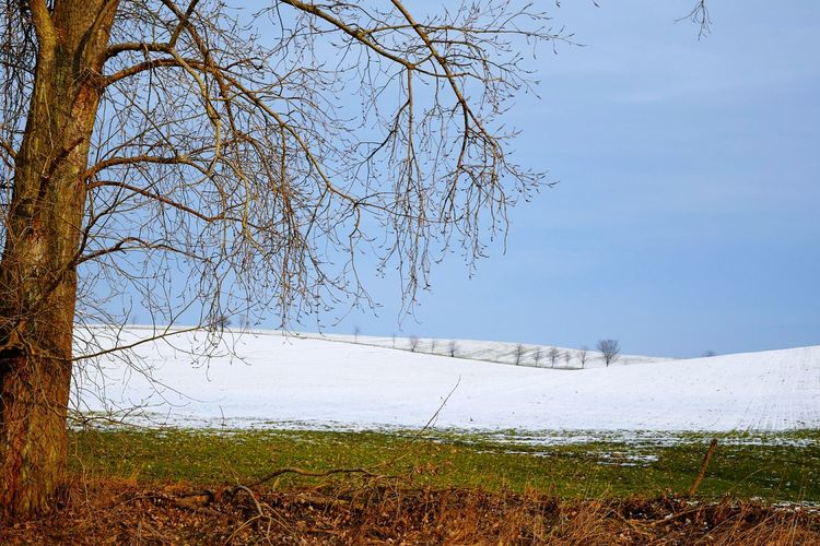 Tree Sky Nature Clear Sky Outdoors Growth Beauty In Nature Tranquility Scenics Winter Day January 2017 Cold Temperature How's The Weather Today? Wartberg Fieldscape Winter 2017 Snowing Skyporn Tree_collection  Tree Travel Destinations Beauty In Nature Snow Tree