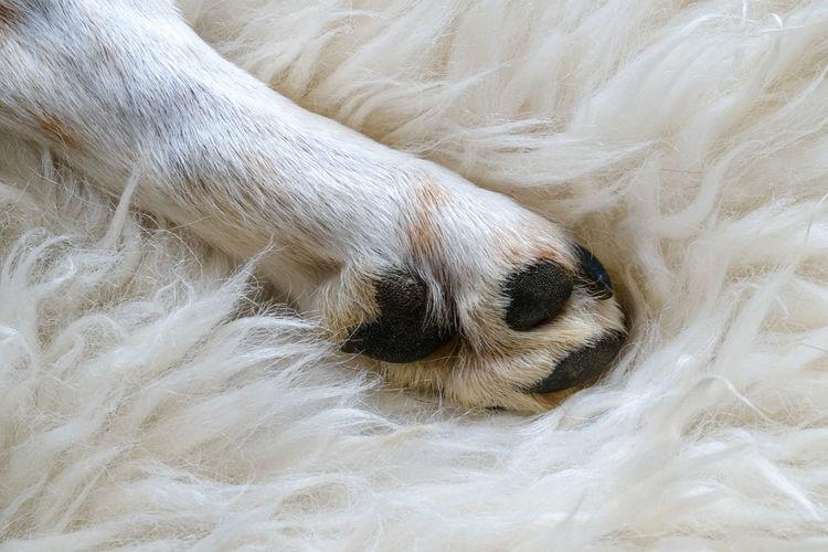 High angle view of dog sleeping