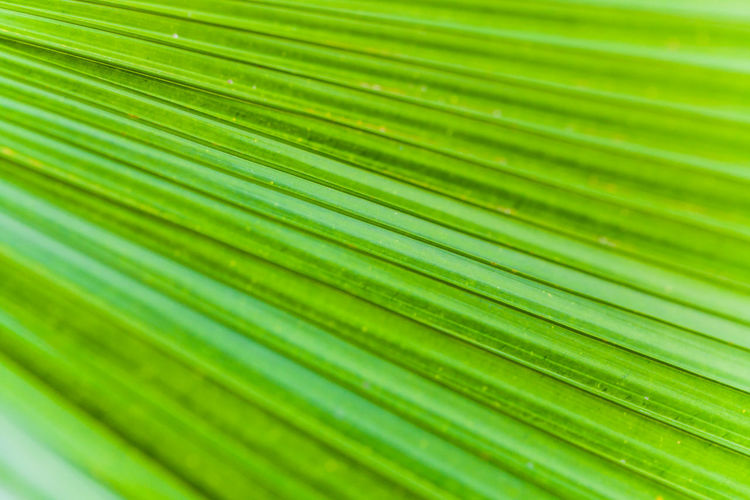 Macro Shot Of Leaf