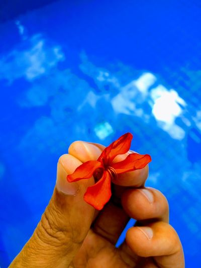 Detalhes Human Hand UnderSea Fingernail Women Water Fruit Blue Holding Manicure Red