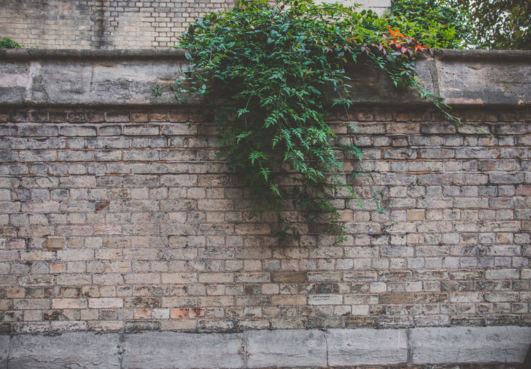 Architecture Built Structure Plant Wall Wall - Building Feature Brick Wall Growth Brick Building Exterior No People Day Ivy Green Color Plant Part Leaf Outdoors Nature Creeper Plant Low Angle View Tree Stone Wall Eyeem Travel London Wallpaper Backround