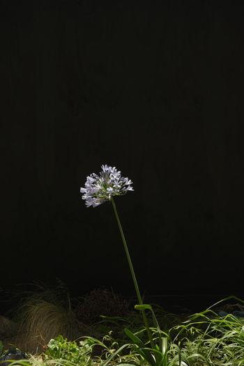 Flower on black