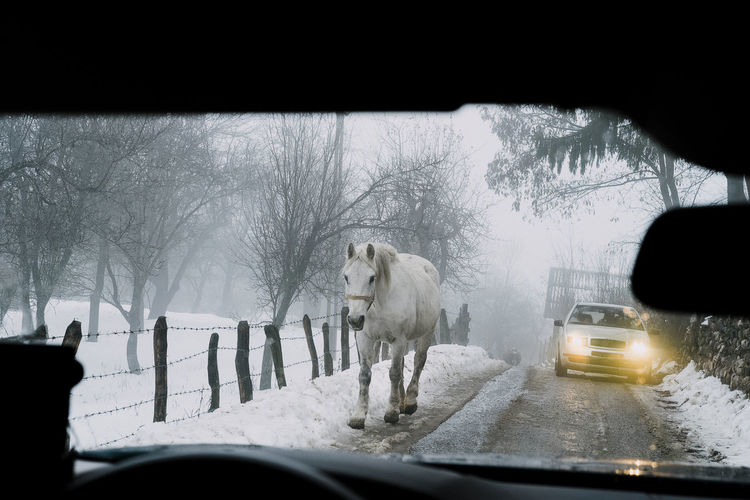 How would you solve this situation? Horse Narrow Narrow Road Snowy Road Country Road Road One Animal Animal Animal Themes Domestic Animals Snow Cold Temperature Winter Car Interior Car Window Windscreen Steering Wheel Vehicle Mirror Dashboard Car Point Of View Vehicle Vehicle Interior