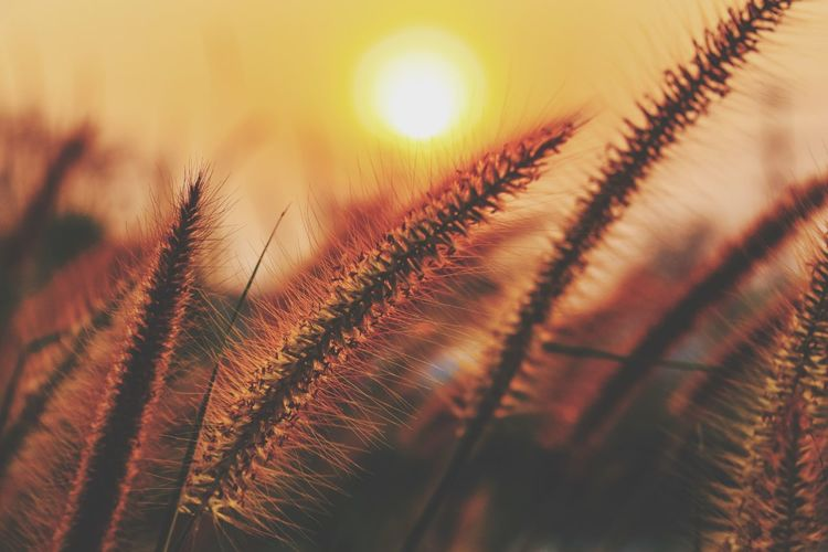 Background Morning Sunlight Filed Flower Nature Sunlight Sunset Nature EyeEm Selects Growth Nature Plant No People Sun Close-up Sky Beauty In Nature Outdoors Day Shades Of Winter