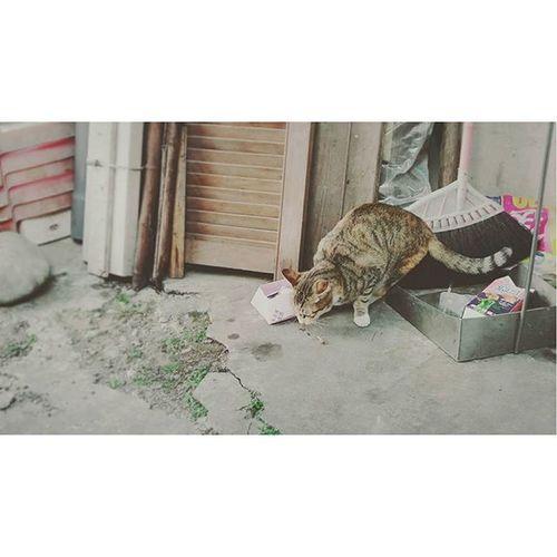 貓吃壞東西 不吃香蕉……。 Cat Eat Gray Wall Floor 貓 吃 壞東西