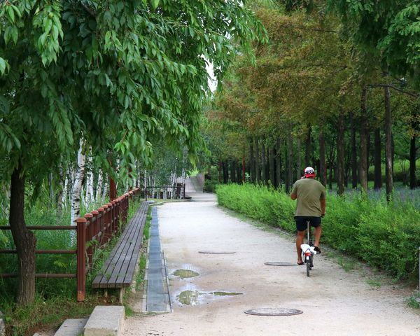Outdoors Park Trees Bicycle Nature Nature_collection Sunny