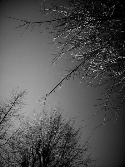 Sky And Trees Supernormal Monochrome