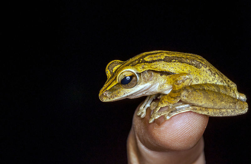 Cropped Image Of Finger With Frog Against Black Background