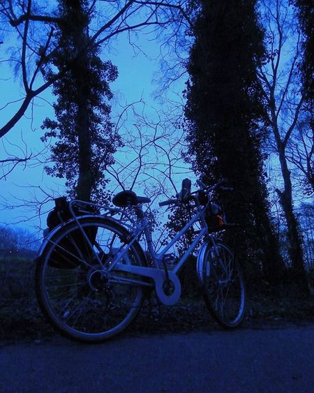 Twilight Bicycle Dreaming My bike rests at one of my favourite spots on our Commute as I take Photographs of the twilight Trees and Moon www.facebook.com/melaniecycles www.facebook.com/PrayerCycles Prayercyclesrides.wordpress.com Naturespeakstotheheart Art Photography Photos Lifethroughalens Cyclephotography Naturephotography Nikon Nightphotography Nightcycling Commutebybike Wintercycling Lincoln Lincolnshire Nikon_photography Nikons9900 Nature Evening woods @bobbinbicycles