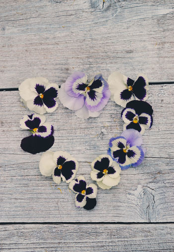 Wood Grain Beauty In Nature Close-up Directly Above Flower Flower Head Flowering Plant Fragility Freshness High Angle View Inflorescence Nature No People Outdoors Pansy Petal Plant Purple Purple Flower Still Life Summer Table Vulnerability  Wood Wood - Material