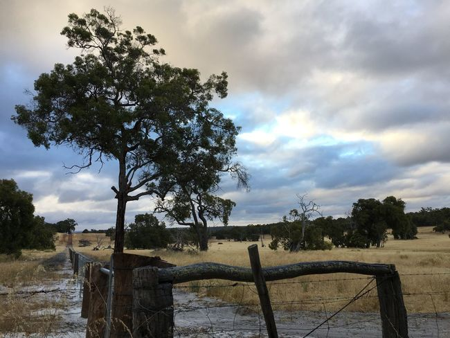 Australia Barrier Beauty In Nature Cloud - Sky Clouds And Sky Corner Country Countryside Day Farm Fence Grass Growth Landscape Nature No People Outdoors Sand Scenics Sky Tranquil Scene Tranquility Tree Tree Wood
