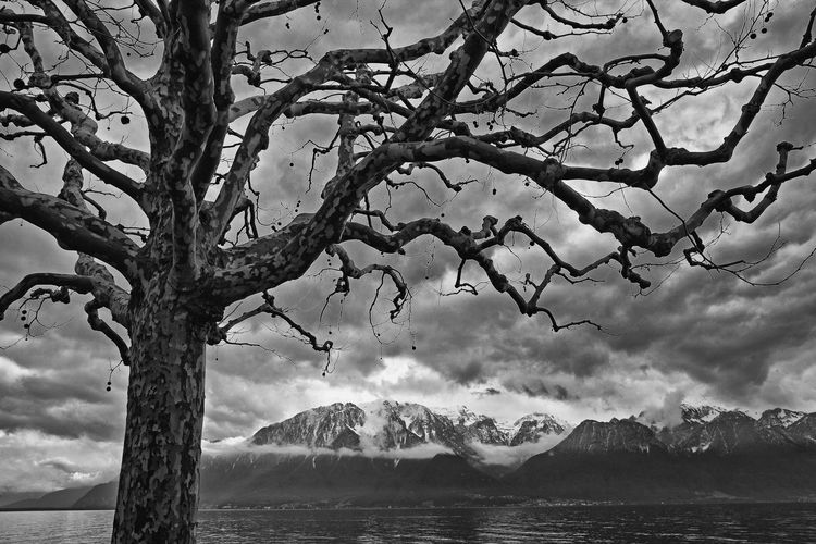 Bare tree by sea against sky