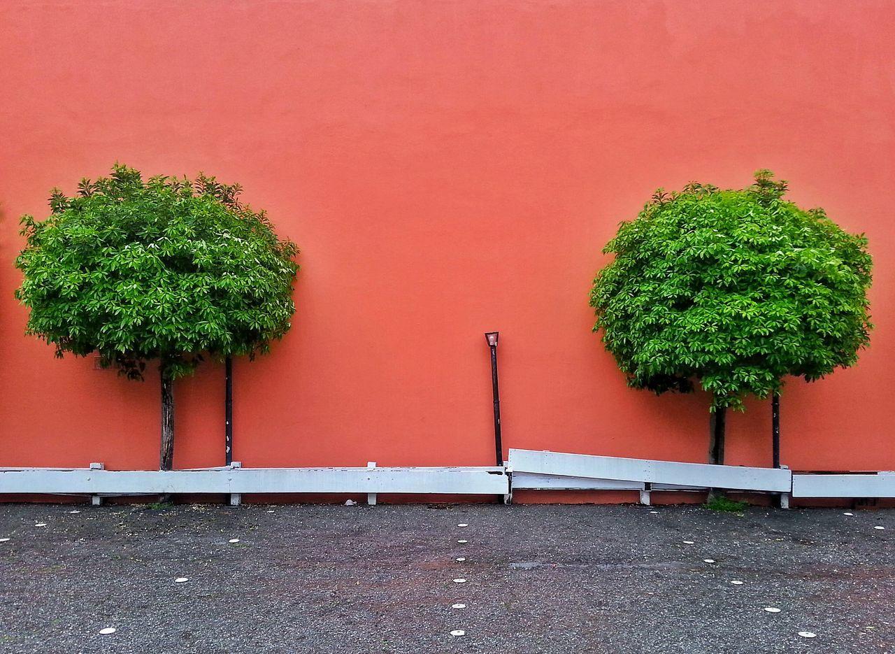 Trees growing against orange wall