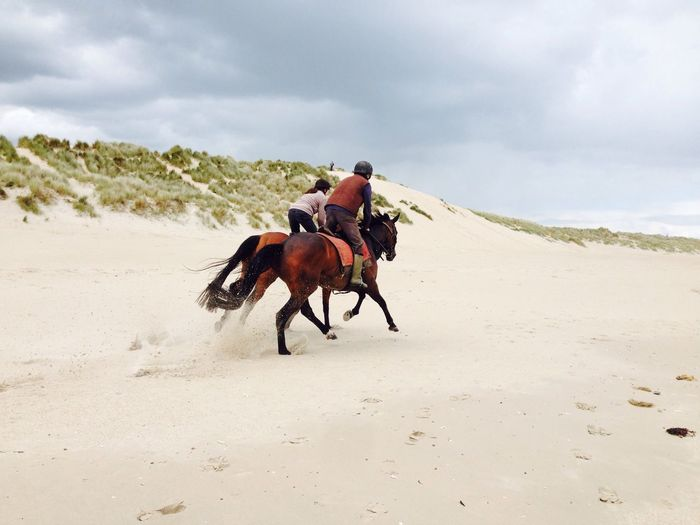 Rear view of people riding horses at sandy beach against sky