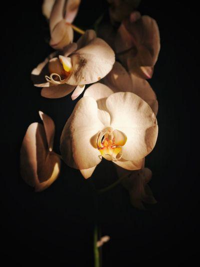 Orchids Orchids