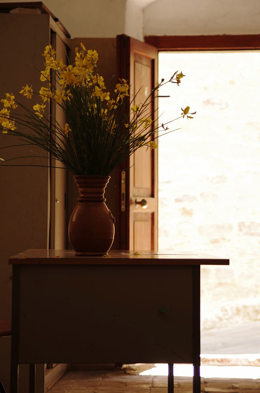 table, indoors, nature, no people, home interior, growth, beauty in nature, flower, day, close-up