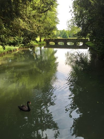 Serenity Audley End
