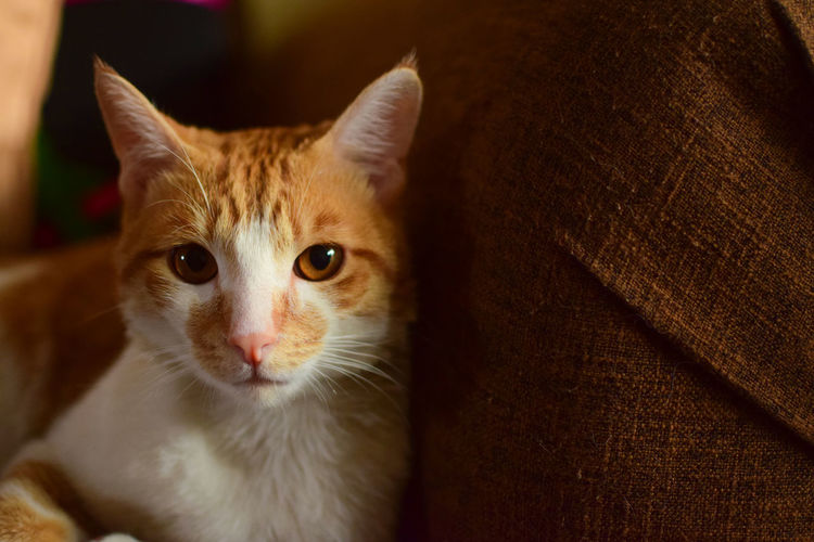 My pet kitten Nala Banana 😝 Big Eyes Brown Eyes Cats Of EyeEm EyeEm Best Shots EyeEm Gallery EyeEmBestPics Brown Color Cats EyeEm Cats Fur Kitten Whisker