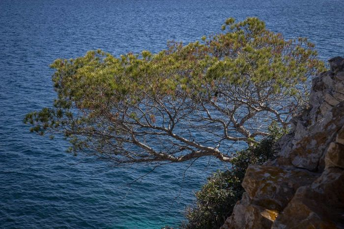 Beauty In Nature Cliff Cliffs Cliffside Horizon Over Water Mallorca Mediterranean  Nature No People Outdoors Peguera Plant Rock - Object Rocks Scenics Sea Stone Material Tree Water