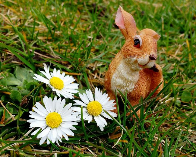 Close-Up Of Easter Bunny By Daisy Flowers On Grassy Field