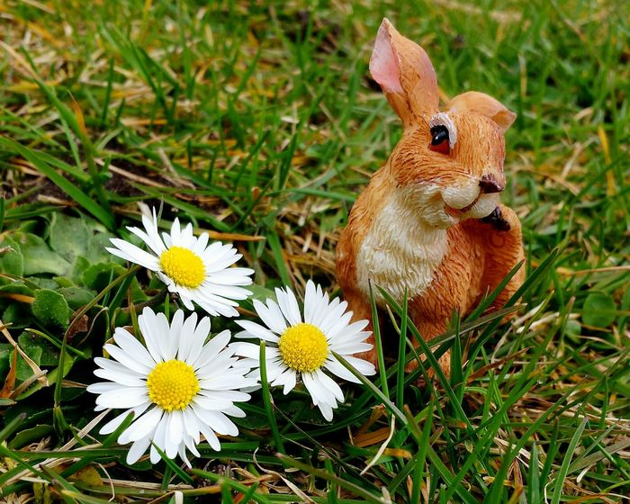 "Easter bunny portrait. "" Hey, honey... "" Easter Bunny may flirting wise (?) be telling his bunny girl... 😉. Easter Is Coming Soon Spring Into Spring Spring Is Coming  Learn & Shoot: Working To A Brief Easter Is Around The Corner Easter Ready Grass Daisies Daisy Daisies Are My Favorite Still Life Ladyphotographerofthemonth Spring Has Sprung Learn & Shoot: Balancing Elements Popular Photos Beliebte Fotos Learn & Shoot: Composition Easter Arrangement"