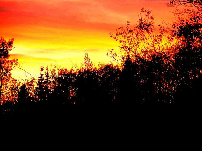 Summer Sunset Paysage D'été Coucher De Soleil Sky And Trees Sky Sunset Fire In The Sky My Favorite Place Color Palette Outdoors Nature Photography Outside Photography Autumn Colors Firesky Screenshot Take TakeoverContrast
