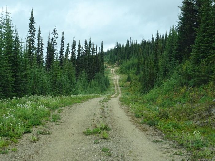 Narrow Dirt Road In Forest