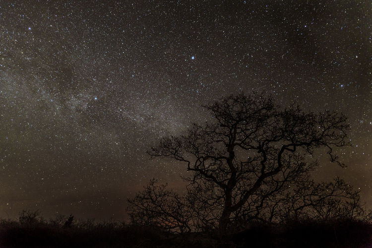 Sweden Astronomy Bare Tree Beauty In Nature Constellation Galaxy Globular Star Cluster Illuminated Landscape Low Angle View Milky Way Nature Night No People Outdoors Scenics Sky Space Space Exploration Star - Space Star Field Tranquility Tree
