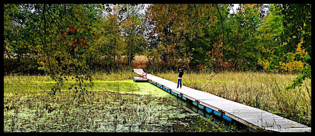 Photographer Taking A Shot Swamp Automn