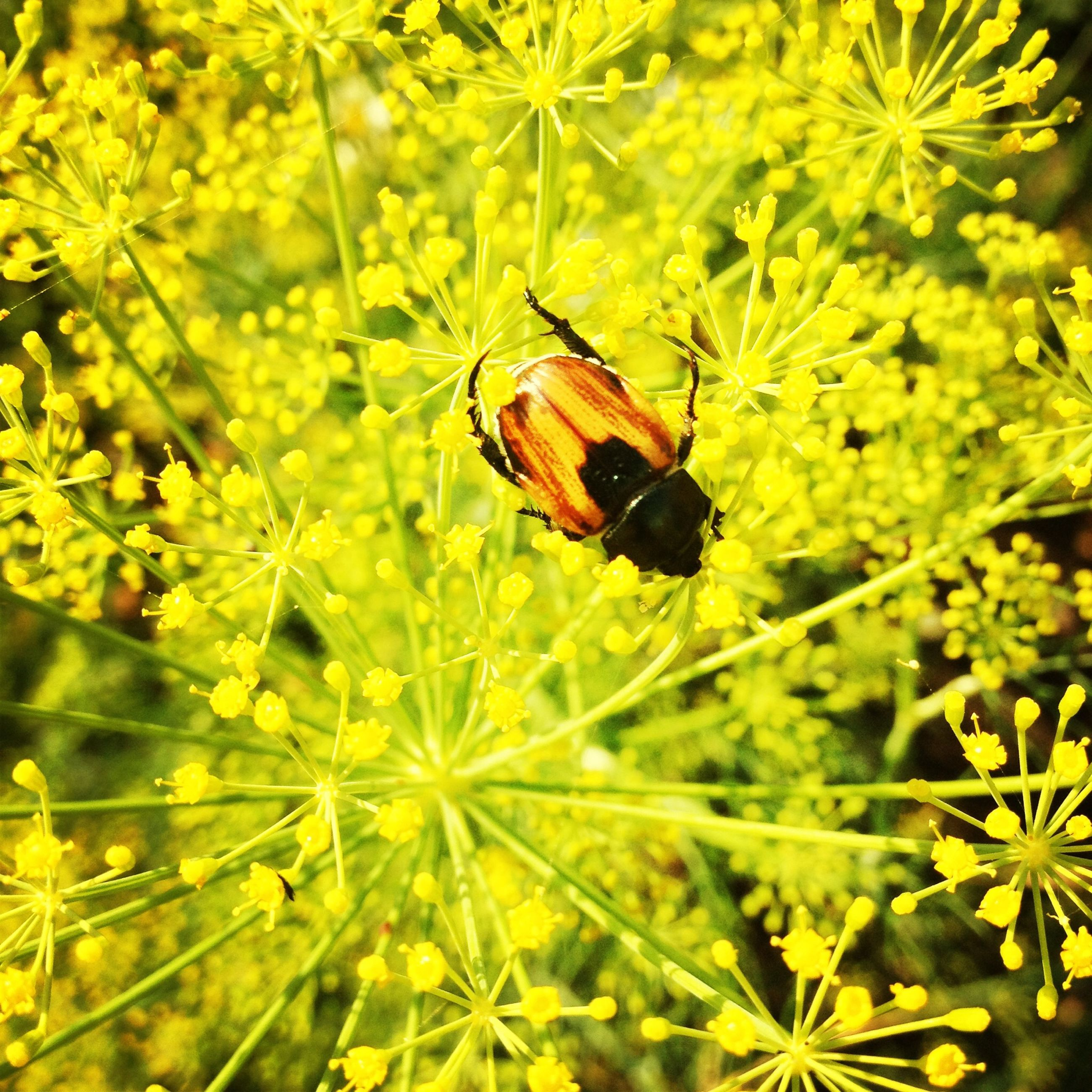 one animal, insect, animal themes, animals in the wild, wildlife, flower, growth, nature, butterfly, beauty in nature, butterfly - insect, plant, close-up, perching, leaf, fragility, pollination, freshness, focus on foreground, yellow