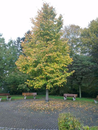 Autumn 2014 #no edit #no filter EyeEm Nature Lover Taking Photos Autumn Nature_collection