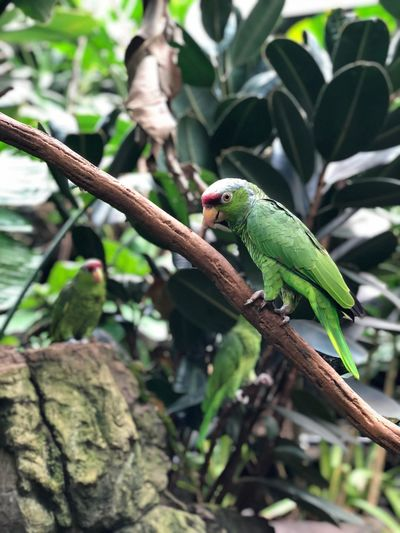 Animal Animal Themes Animal Wildlife Vertebrate Animals In The Wild Tree One Animal Bird Plant Part Nature Green Color Plant