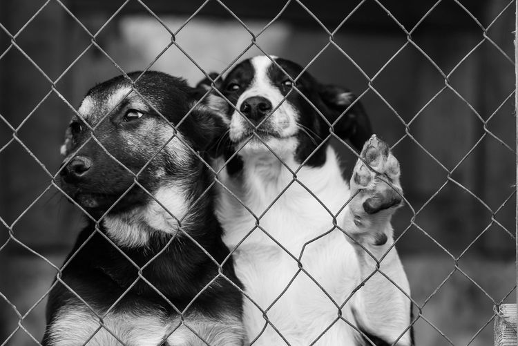 View of dog seen through chainlink fence