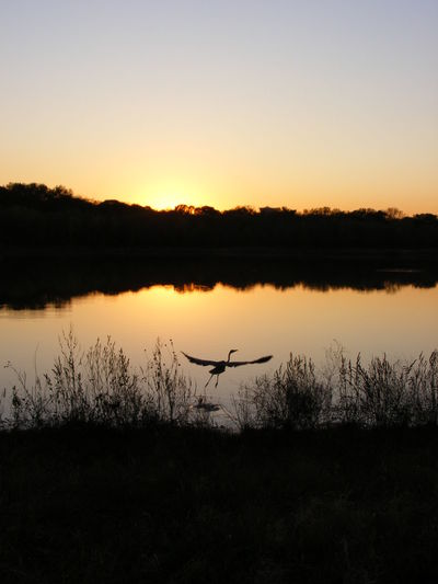 Texas Plano Nature Tranquility Beauty In Nature Water Freedom Mid-air Dallas, TX Tranquil Scene Bird Pond Wildlife Water Fowl 43 Golden Moments Fine Art Sunset No One Around Nature Photography Landscape Water Surface Water Birds Texas Landscape